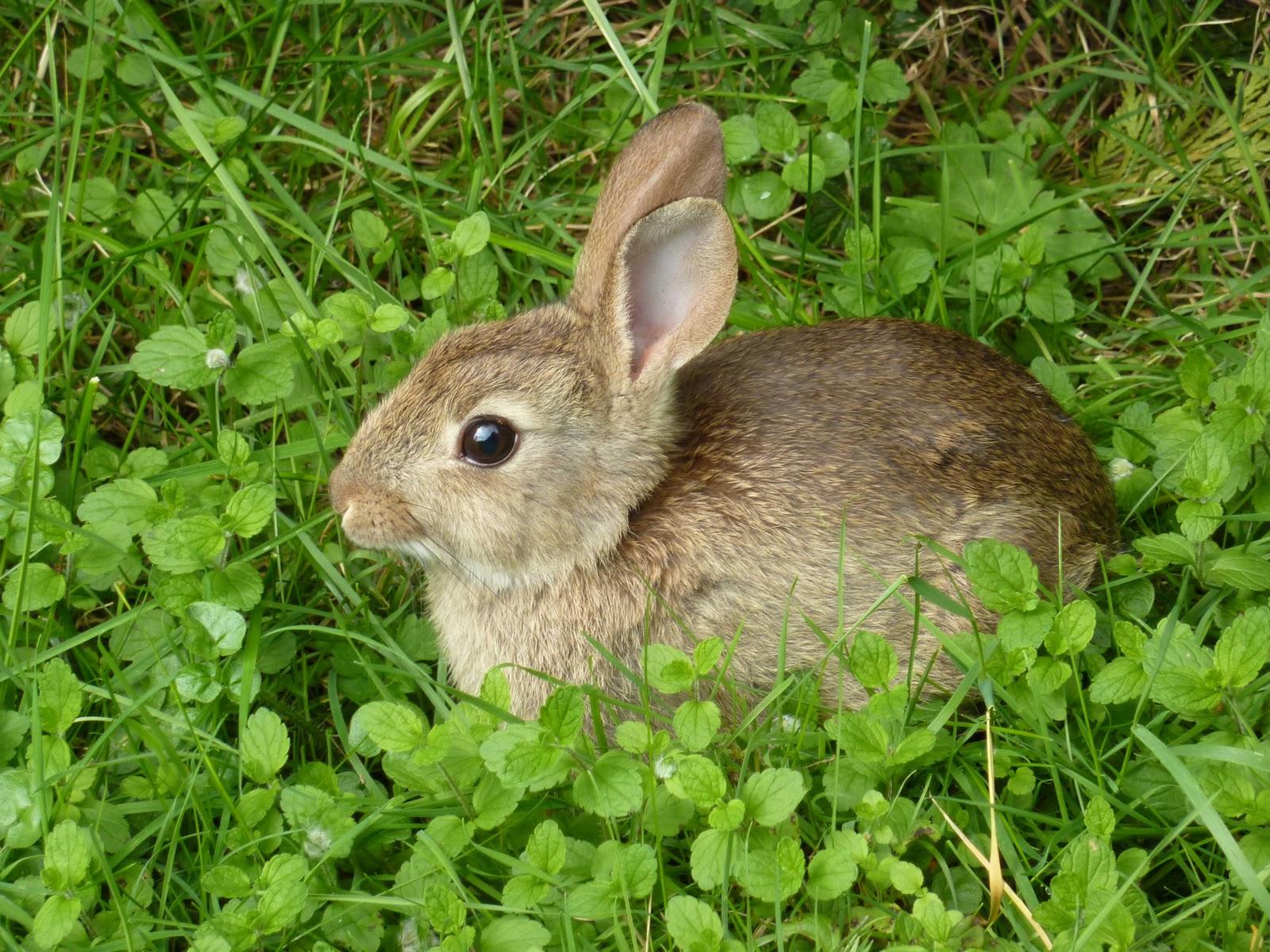 Enjoying Wildlife in Your Backyard by Electrician ...